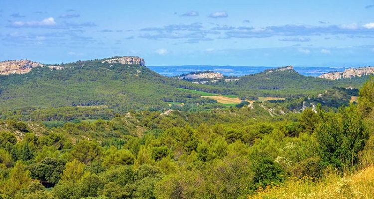 Alpilles foothills