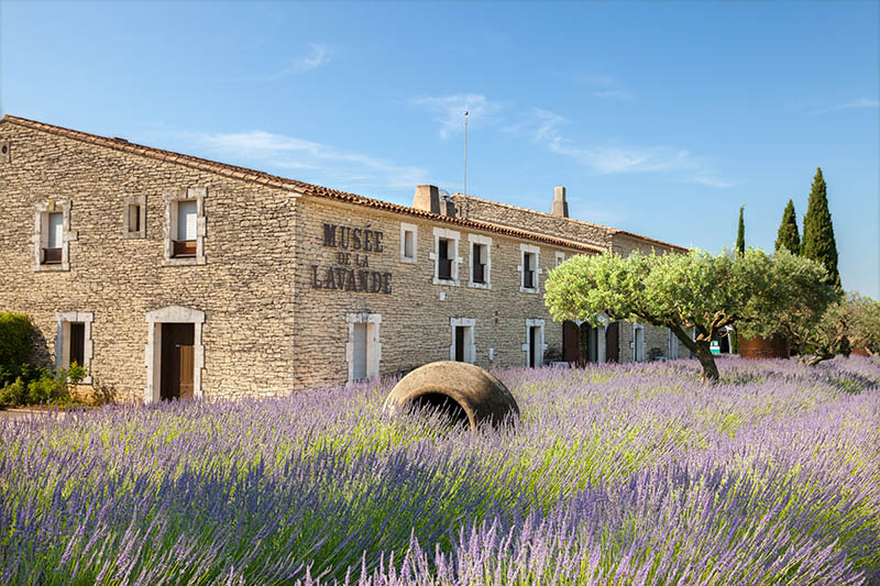 COUSTELLET, FRANCE - JUNE 13, 2014: The Museum of lavender in Provence on summer hot day.; Shutterstock ID 226118080; PO: michelin