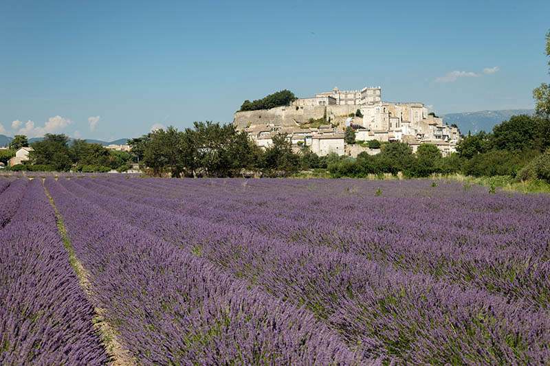 The village Grignan, Drome, Provence, France with lavender field.
