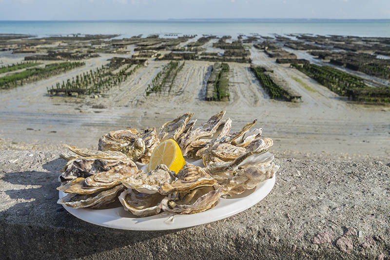 Fresh oysters served besides an oyster farm in the city of Cancale, France