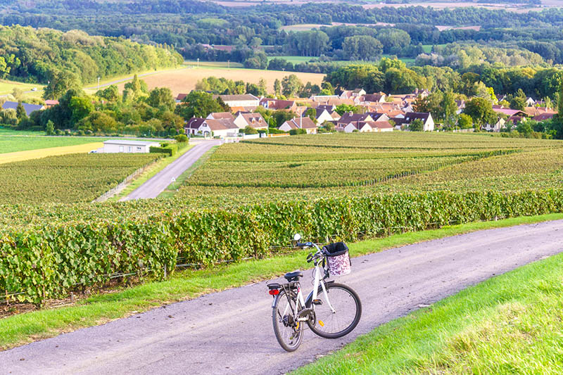 Bicycle on the road on row vine green grape in champagne vineyards at montagne de reims countryside village background, France