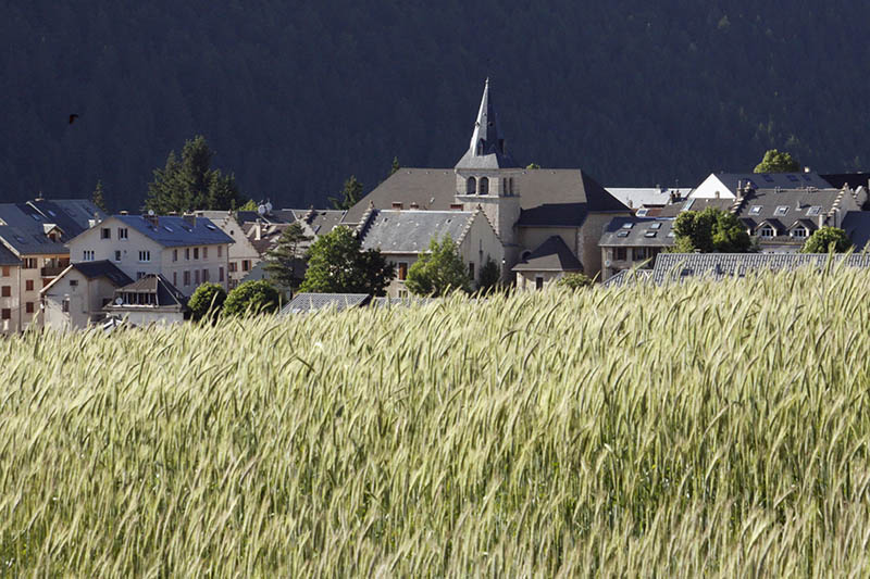Village of Villard de Lans and field of wheat in the Vercors, Isère, Rhône-Alpes, France.